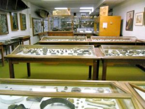 collections area