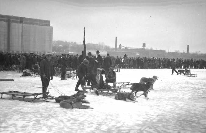 Dog races in Midland Harbour, date unknown.